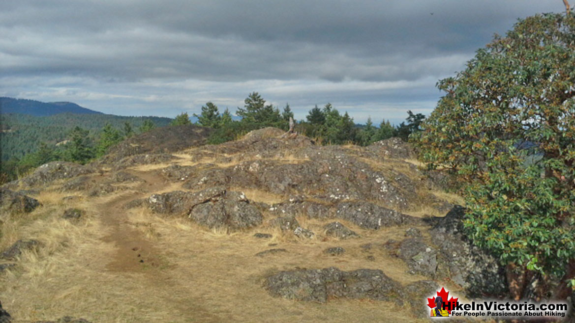 Lone Tree Hill Hike in Victoria